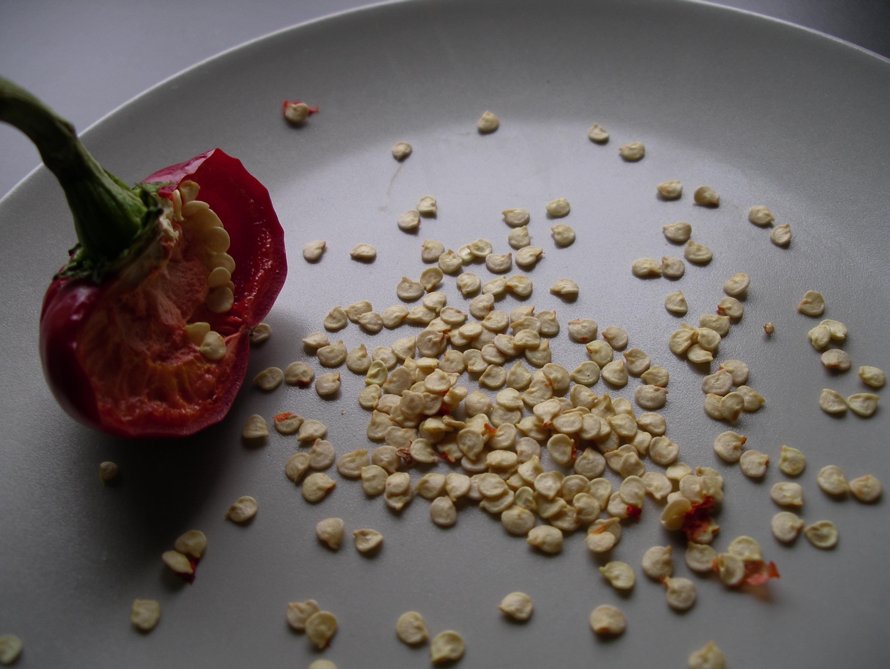 Seed Suppliers A Kitchen Garden Notebook
